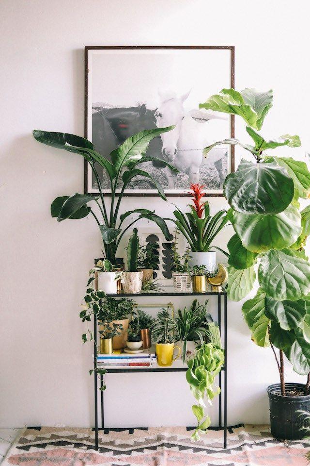 Creative Ways To Display Plants Tons Of Greenery Ideas Plant Decor Indoor Plant Decor Plant Shelves