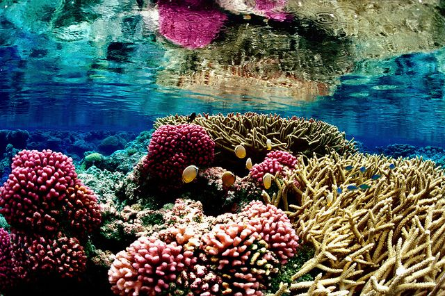 "ScienceDaily reports: ""Coral Itself May Play Important Role in Regulating Local Climate: Coral Chemicals Protect Against Warming Oceans."" http://www.sciencedaily.com/releases/2013/10/131023165248.htm"