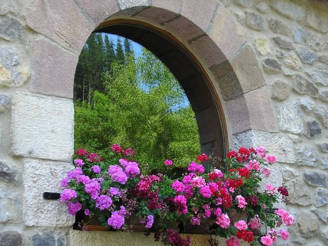 Which flowers are the most suitable to keep in windows
