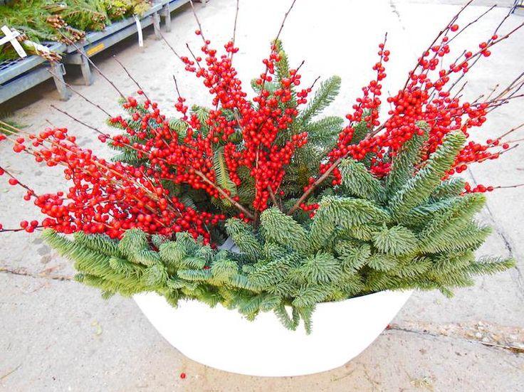 composition de baies rouges et plantes à feuilles persistantes au jardin d'hiver en pot
