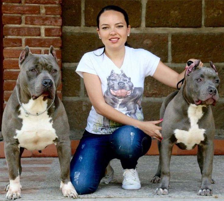 Andrades Kennel | Venta de Cachorros American Bully Guadalajara