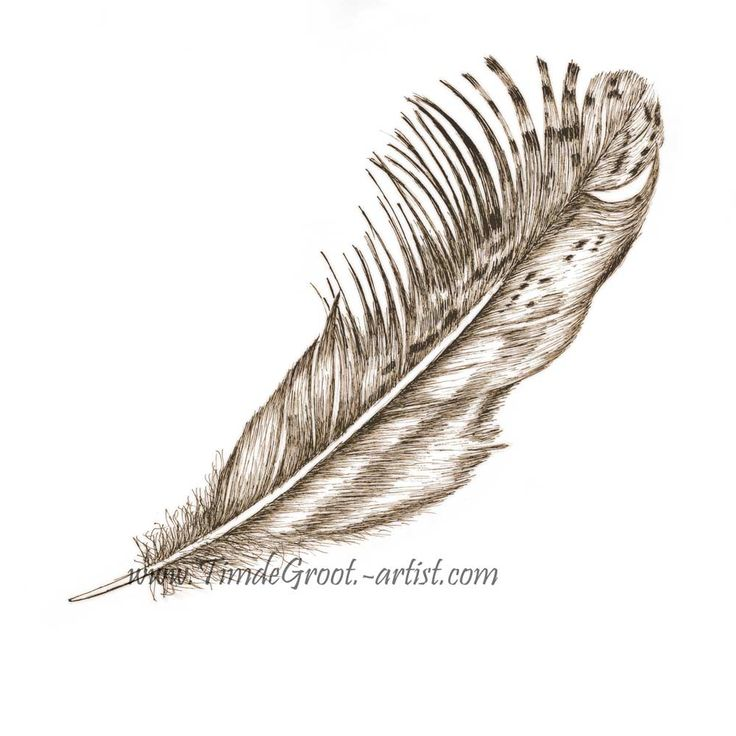 Free Falling 2.  Between release and destination is the gentle drift towards groundedness. The transient free fall is a time where past sins can be forgiven and destiny is shrouded in dream.  It is the celebration of freedom.  Feathers have a links to the spirit world and Free Falling is about putting your faith in destiny.  #feather #ink #art #print #wallart #destiny #botanicals