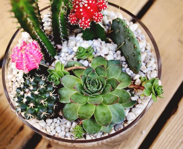 DIY Projects: Simple Cactus Garden Ideas | Home Design And Interior