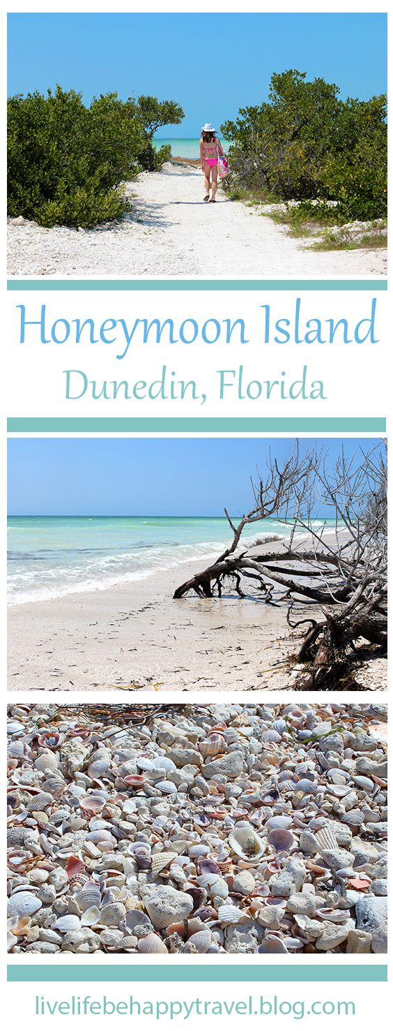 An Unspoiled Paradise in Florida - FL - beach - shells -  things to do Florida