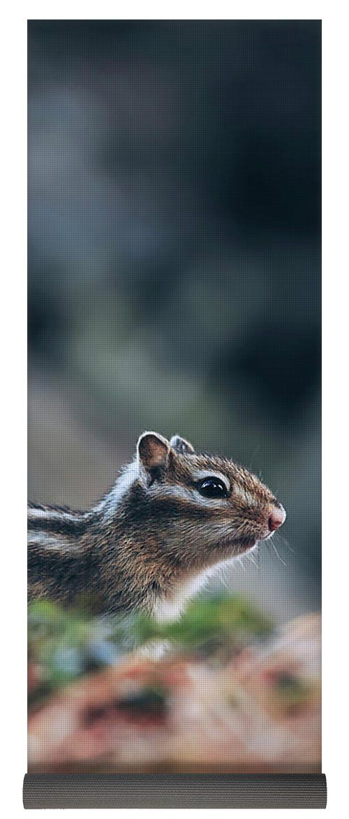 Oksana Ariskina Yoga Mat featuring the photograph Little Chipmunk by Oksana Ariskina.  A little chipmunk standing and posing on a fallen tree on the forest #OksanaAriskina Available as poster, greeting card, phone case, throw pillow, framed fine art print, metal, acrylic or canvas print with my fine art photography online: www.oksana-ariskina.pixels.com