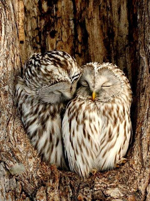 """pagewoman: """"Lovebirds ♡ """""""