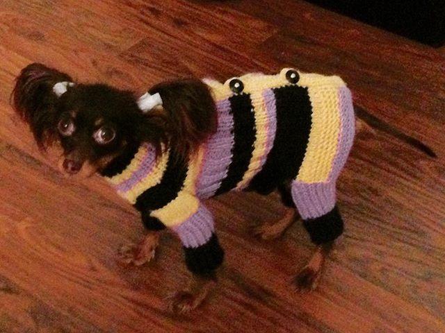 First knitted thing after something like 30 years without knitting haha Good feeling of accomplishment 😆😁🎶 #CocoMalenjkayaStranaJamaika #dogclothes #knittingfordogs #kniplingen #cutedog #dogsofinstagram
