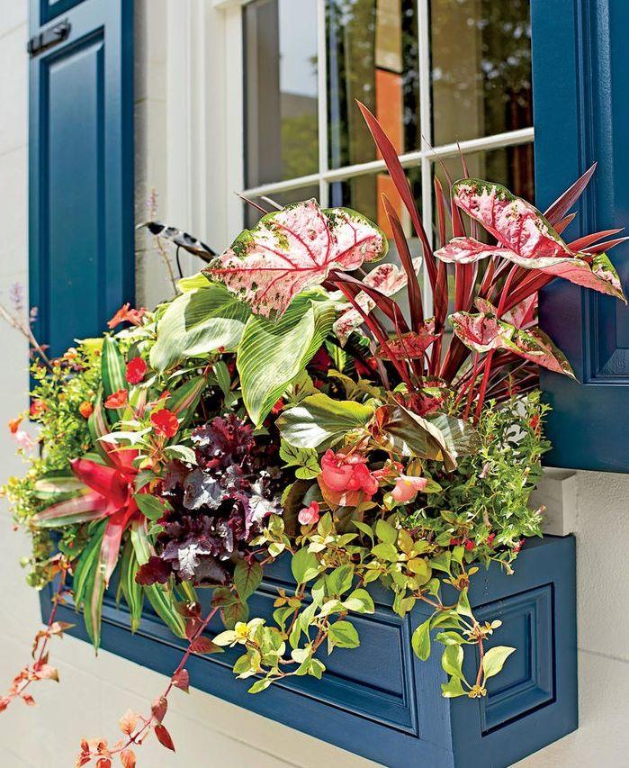 480 beste afbeeldingen van pflanzen bloembakken tuinramen en zomerse recepten. Black Bedroom Furniture Sets. Home Design Ideas