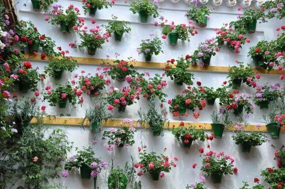 50 Best Tree Ideas Images On Pinterest Flowering Trees