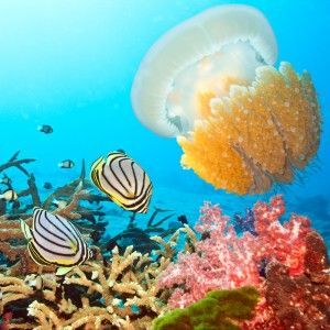 Scuba Diving Holiday Insurance Cover UK #dive #travel #insurance,diving #holiday #insurance,diving #insurance #uk,scuba #dive #insurance,scuba #diving #insurance #cover http://honolulu.remmont.com/scuba-diving-holiday-insurance-cover-uk-dive-travel-insurancediving-holiday-insurancediving-insurance-ukscuba-dive-insurancescuba-diving-insurance-cover/  IDEC Scuba Dive Insurance (Dive Accident Cover) We guarantee to beat any like for like specialist diving accident cover quote by 10%! * IDEC…