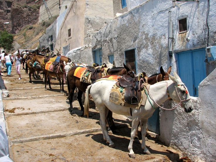 Donkeys in #Fira! #Santorini #Riding