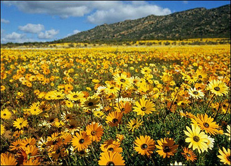 Namaqualand - South Africa