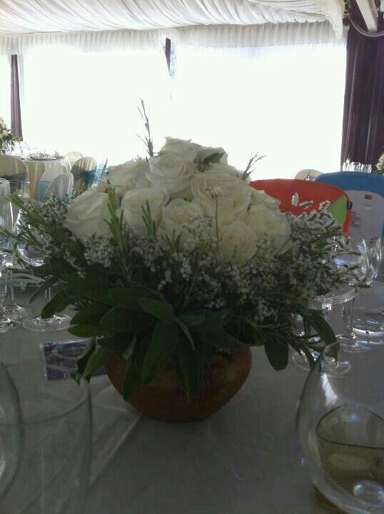 Salvia rosmarino