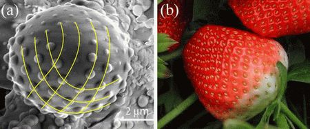 spirals in nature | Scientists find clues to the formation of Fibonacci spirals in nature