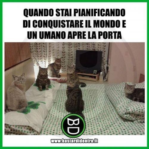 #Umorismo #Gatti