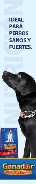 Enfermedades de perros - Carcinoma hepatocelular en perros