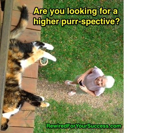 Purr-spective