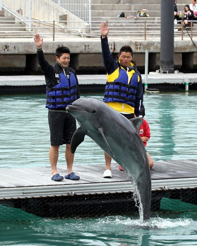 Love dolphins!