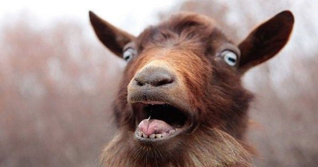 Man Caught Raping Neighbours Goat Says He Couldn't Get Laid At Funeral :http://gossfeed.com/2016/11/09/sex-with-animals-goat/