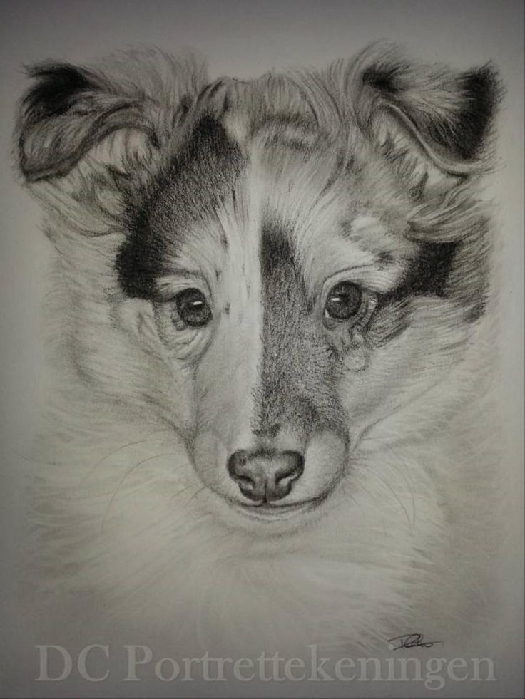 """""""Pup"""" realistic portrait drawing made with pastelpencils #realistic #portrettekening #portraitdrawing #animalart #dog #pet #animal #drawing #pasteldrawing #blackandwhite #dogdrawing #art #realism #realisticdrawing #pastel #blackandwhitedrawing #pastelart #dogdrawing"""