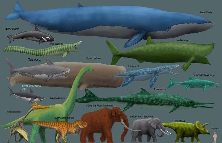 colossal squid vs megalodon - Google Search | Khai ...