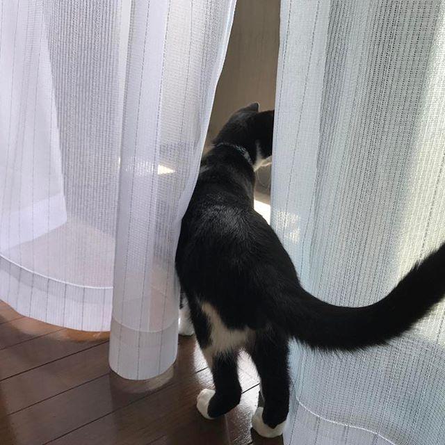 朝からスカパーやらネットの工事が来てて一苦労だったねーケイくーん🐈🐈🐈💦おつかれちゃん💗  #🐈#ケイくん#猫#日本猫#子猫#愛猫#黒白猫#タキシードキャット#ハチワレ#ネコ#靴下猫#にゃんすたぐらむ#猫部#男の子#ふわもこ部#にゃー #cat#babycat#pets#catstagram #petstagram#taxidocat#japan