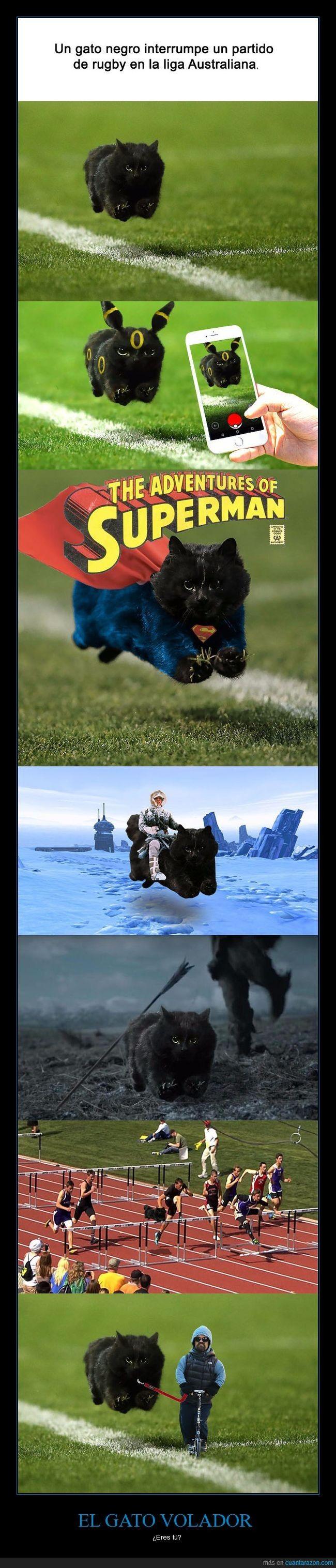 Gato volador interrumpe un partido de rugby e Internet se ceba con chops - ¿Eres tú?   Gracias a http://www.cuantarazon.com/   Si quieres leer la noticia completa visita: http://www.estoy-aburrido.com/gato-volador-interrumpe-un-partido-de-rugby-e-internet-se-ceba-con-chops-eres-tu/