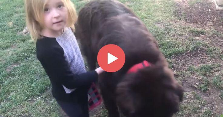 Smart little girl defends her dog! | https://blog.entirelypets.com/pet-videos/smart-girl-defends-dog?utm_source=facebook&utm_medium=web&utm_campaign=epfbpostvvnew#utm_sguid=148622,e12ca470-0ed0-c8a5-8821-5c25fdfbfbc2