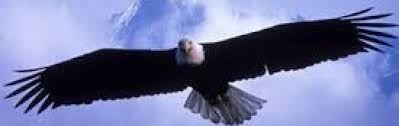 Resultado de imagen de images of eagles for header