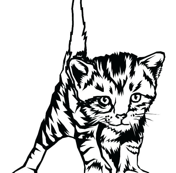 Kitten Colouring Pictures To Print Kittens Coloring Pages