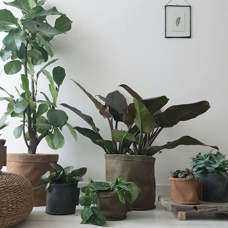 [NEW] Hele stoere buffelleren manden. Leuk voor je planten of als opbergers.