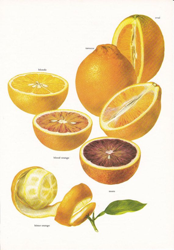 New orange oranges citrus fruit juice vintage botanical art print