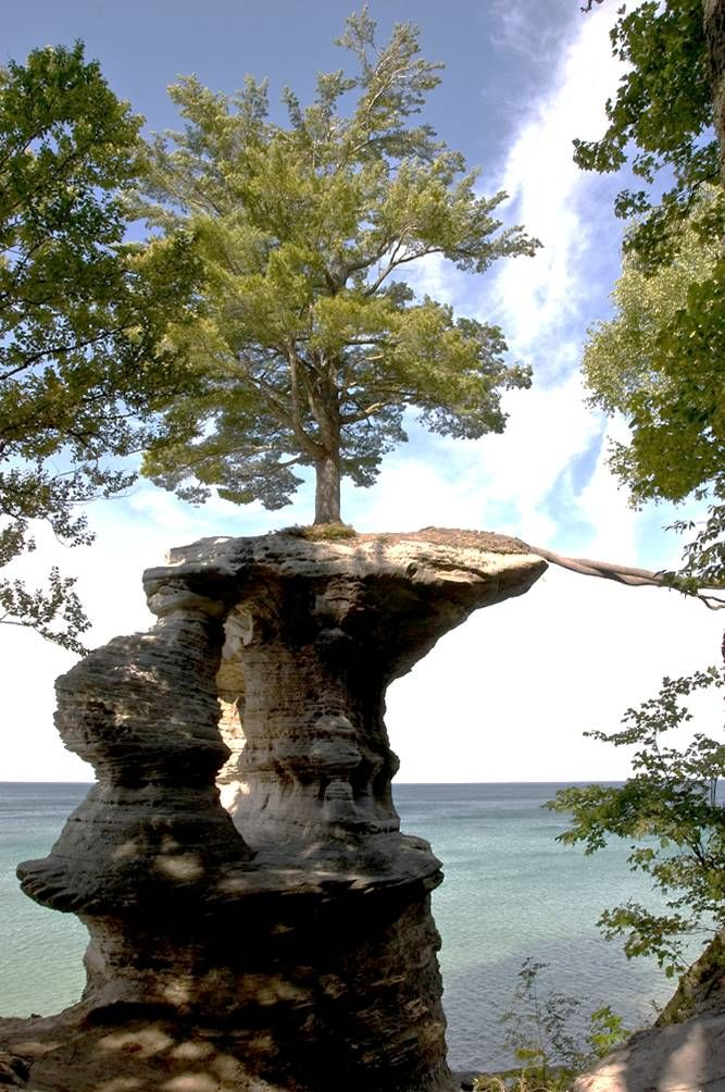 Look a little closer and you will see that rope on the right of the picture is not, in fact a rope. It is a system of roots, extending and stretching over the edge of the rock to the main bluff where there are nutrients and water aplenty. Pictured Rocks National Lakeshore.