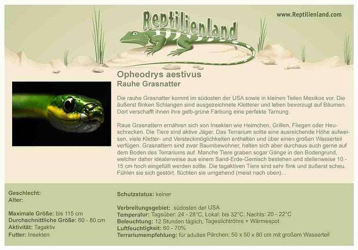 Grasnatter - kompakte Übersicht der Haltungsbedingungen. Unsere Karteikarten können auch zum Beschriften von Terrarien verwendet werden. Ausführliche Haltungsinformationen gibt es auf www.reptilienland.com