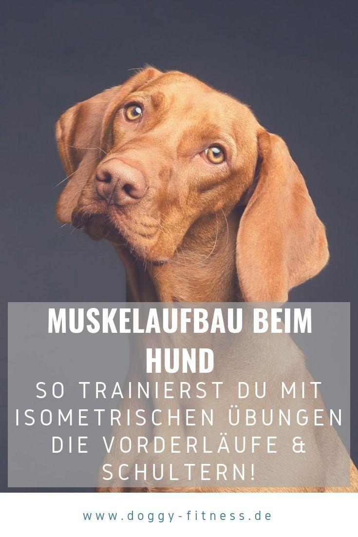 Muskelaufbau Beim Hund Fur Die Vorderlaufe Und Die Schultern Geht Effektiv Und Leicht Mit Isometrischen Ubungen Ich Zeige Dir Muskelaufbau Hunde Gesunde Hunde