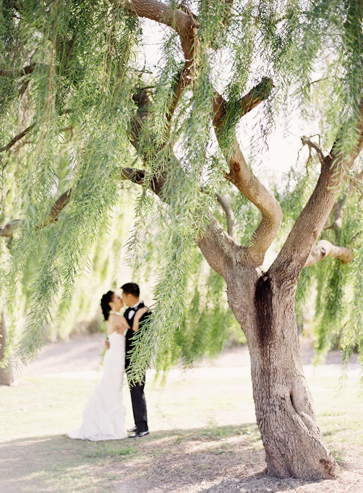 tree love. Jen Huang Photography.