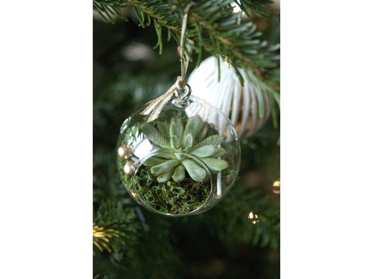 Glob de Craciun terariu - Craciun - Colectii plante si flori - Plante Cadou