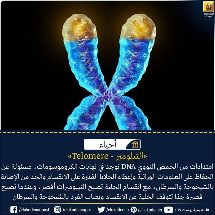 امتدادات من الحمض النووي منقوص الأكسجين توجد في نهايات الكروموسومات مسئولة عن الحفاظ على المعلومات الوراثية بأمان وإعطاء الخلايا القد Telomeres Biology Science