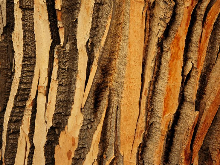 Tree Pattern Photos, Trees Wallpaper, Gallery -- National Geographic