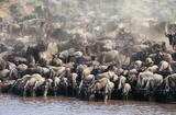 We also want to go see The Great Migration in Africa.