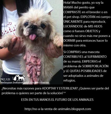 Comprar animales en Guadalajara