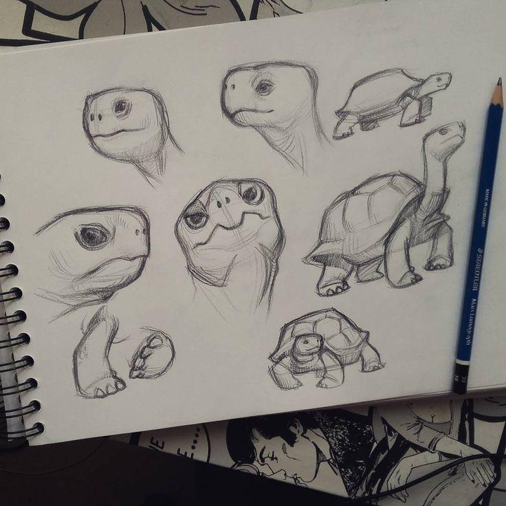 tortoise drawing for pinterest - photo #23
