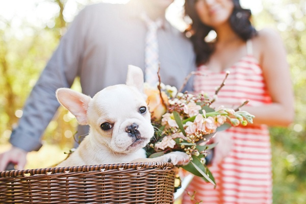 A tisket a tasket a Frenchie in a basket