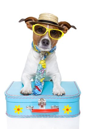 Pet Friendly Accommodation - Dog Friendly Caravan & Holiday Parks | turu Australia