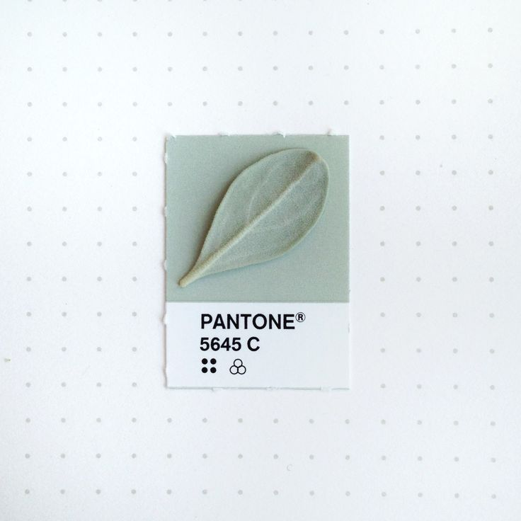 Pantone 5645 color match. The back side of a fuzzy Texas Sage leaf. It's  also called the Texas Ranger bush. Or better, the Chuck Norris bush. No, it's not an herb.  |  tinypmsmatch.tumblr.com  |  TONS MORE AFTER LINK