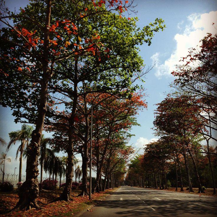 'Autumn in Singapore'