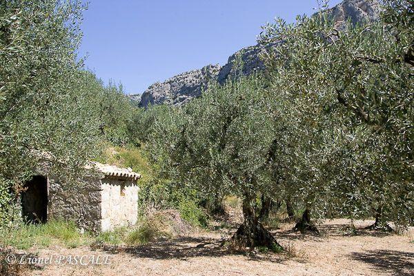 Buis-les-Baronnies, Drôme, France.  The village is well-known for its olive trees and lime. Visitez la charmante petite ville réputée pour ses champs d'oliviers, ses tilleuls et sa douceur de vivre!