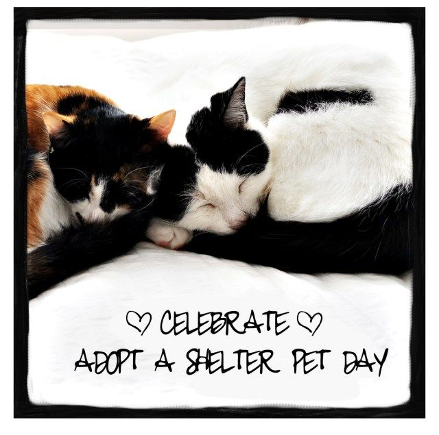 Celebrate Adopt a Shelter Pet Day!