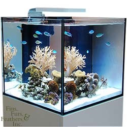 Elos 20 Gallon System Mini Aquarium & Cabinet Stand (e-Lite Not Included) - For the first time aquarium lovers seeking a small complete system can have a system designed and built to the highest standards. The beautiful ELOS SQUARE cabinet holds our ELOS SUMP , with built in freshwater reservoir (top off controller not included), includes quiet and efficient Eheim pumps and our patented NS100, specifically designed for the System MINI.  $999.99 #Nano #Aquarium