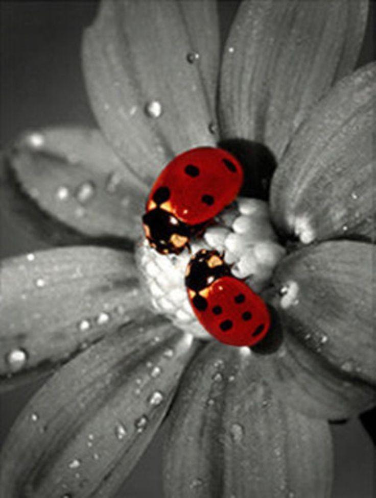Best 25+ Splash of color ideas on Pinterest | Colour splash ...